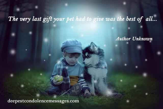 Sympathy Quote for a Loss of a Pet 2