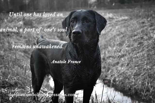 60 Sympathy Quotes Find The Right Words In This Moment Of Grief Classy Loss Of A Pet Quote