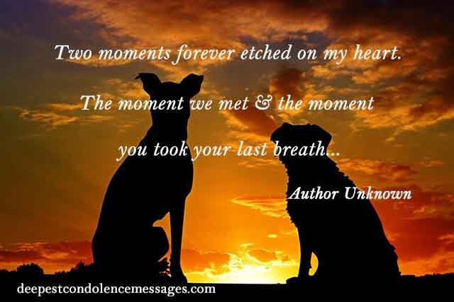 Sympathy Quote for a Loss of a dog 3