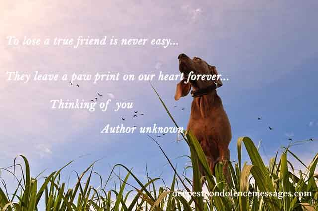 to lose a true friend is never easy they leave a paw print on our heart forever thinking of you author unknown sympathy quote